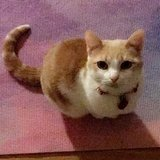 Photo for Looking For A Pet Sitter For 1 Cat In Chicago (Gold Coast)