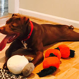 Photo for Looking For A Pet Sitter For In Centreville