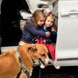 Photo for Walker Needed For 1 Dog In N. Columbus