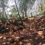 Photo for Sitter Needed For 1 Dog In Mercer Island