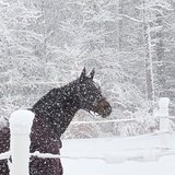 Photo for Horse Care