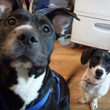 Photo for Sitter Needed For 2 Dogs In Petersburg