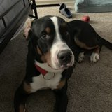 Photo for Looking For A Pet Sitter For 1 Dog In Broken Arrow