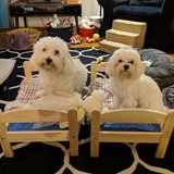 Photo for Sitter Needed For 2 Small Dogs In Beltsville