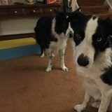 Photo for Looking For A Pet Sitter For 5 Dogs In Warminster