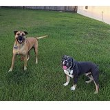 Photo for Looking For A Pet Sitter For 2 Dogs In Kissimmee