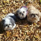 Photo for Pet Care, Feed, Let Out Sitter