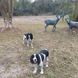 Photo for Looking For A Pet Sitter For 3 Dogs, 4 Cats In Spring Hill