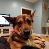 Photo for Looking For A Pet Sitter For 1 Dog In Pomfret Center