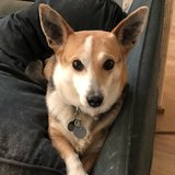 Photo for Walker Needed For 1 Dog In Aurora