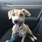 Photo for Sitter Needed For 1 Puppy In Santa Monica