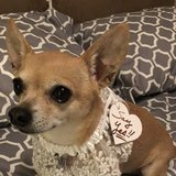 Photo for Looking For A Pet Sitter For 1 Dog In San Antonio