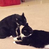 Photo for Sitter Needed For 2 Cats In Marina Del Rey