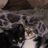 Photo for Sitter Needed For 2 Cats In Salem