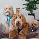 Photo for Walker Needed For 3 Dogs In Wyndmoor