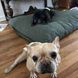 Photo for Looking For A Pet Sitter For 2 Special Needs Dogs In Longmont