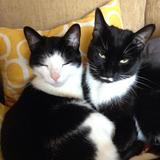 Photo for Sitter Needed For 1 Cat In Westminster