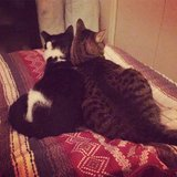 Photo for Seeking A December/Recurring Cat Sitter For Two Lovely Kitties In Union City
