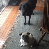 Photo for Sitter Needed For 2 Dogs In Westerville