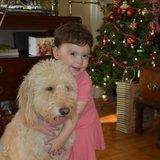 Photo for Dog Sitter For A Few Days For 35lb Golden doodle