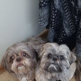 Photo for Looking For A Pet Sitter For 2 Dogs In Rochester