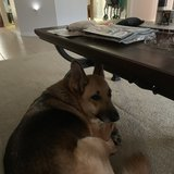 Photo for Looking For A Pet Sitter For 1 Dog In North Port