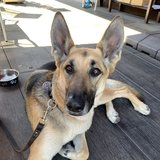 Photo for Looking For A Pet Sitter For 1 Dog In San Jose