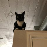 Photo for Looking For A Pet Sitter For 2 Cats In Kansas City
