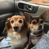 Photo for Looking For A FLEXIBLE Pet Sitter For 2 Dogs In Loveland