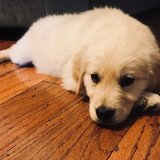 Photo for Sitter (Day-Time Visits) Needed For 1 Puppy In Denton