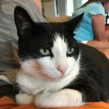 Photo for Looking For A Pet Sitter For 1 Cat In Radcliff
