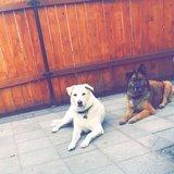 Photo for Dog Sitting