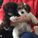 Photo for Sitter Needed For 2 Dogs In Collegeville