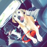 Photo for Sitter Needed For 2 Dogs In Knoxville