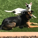 Photo for Looking For A Pet Sitter For 2 Dogs In Phoenix