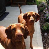 Photo for Looking For A Pet Sitter For 2 Dogs In Chapel Hill