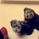 Photo for Looking For A Pet Sitter For 3 Dogs In Chadds Ford