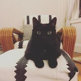 Photo for Responsible Sitter Needed For One Cat In Sunnyside!