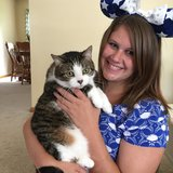 Photo for Sitter Needed For 3 Cats In Canton
