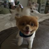 Photo for Looking For A Pet Sitter For 2 Dogs In Deerfield Beach
