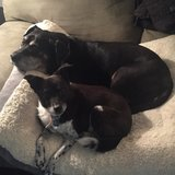 Photo for Sitter Needed For 2 Dogs In Seffner