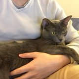 Photo for Cat Sitter