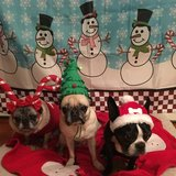 Photo for Looking For A Pet Sitter For 3 Dogs In Highland