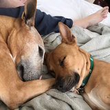 Photo for Sitter Needed For 2 Dogs In Hope Mills