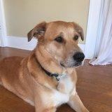 Photo for Walker Needed For 1 Dog In Sebastopol