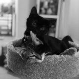 Photo for Playful Kittens Sitter