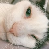 Photo for Sitter Needed For 1 Cat In New York (quasi Special Needs)
