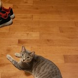 Photo for Looking For A Pet Sitter For 1 Cat In Collegeville