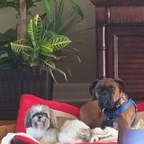 Photo for Pet Sitter