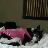 Photo for Pet Caregiver